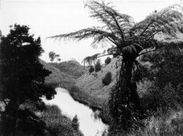 Lake Raupo at Kopuaranga was formed in the 1855 earthquake.